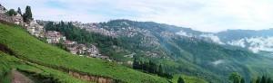 Coltivazioni di tè sui pendii delle alture in Darjeeling